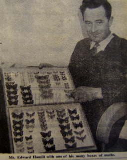 Mr Edward Hamill with one of his many boxes of moths