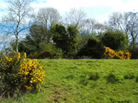 views of and from the Green Mound, Ballynacoy