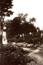 Rear of McClurg garden, Ballydonaghy